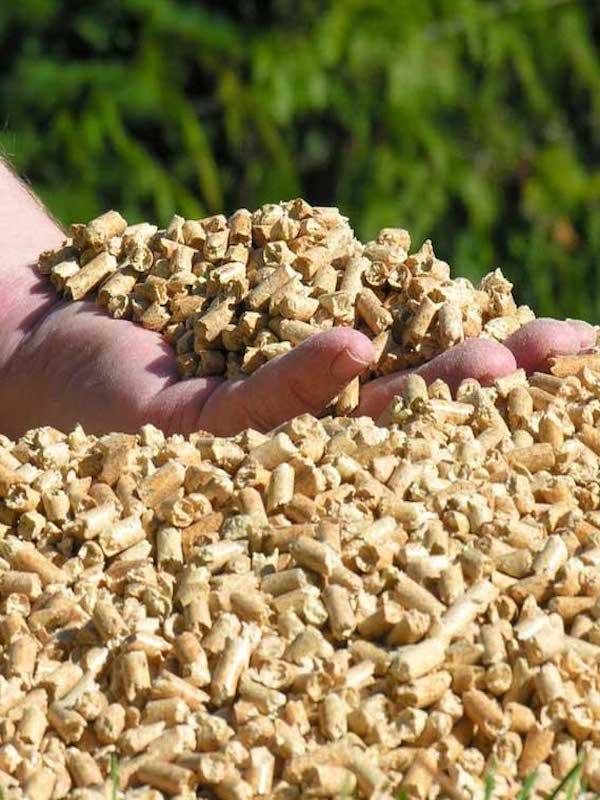Extremadura aportará fondos para la construcción de tres fábricas de pellets