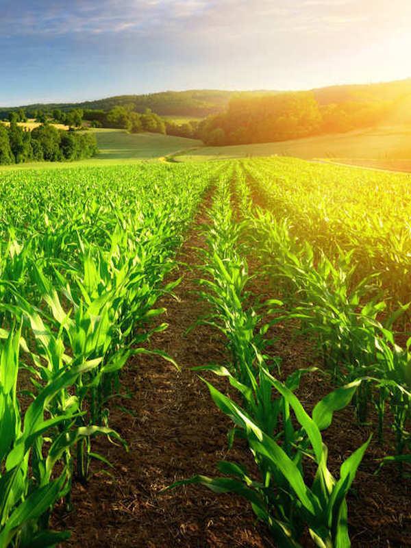 ¿Conoces las nuevas sustancias utilizables para Agricultura Ecológica?