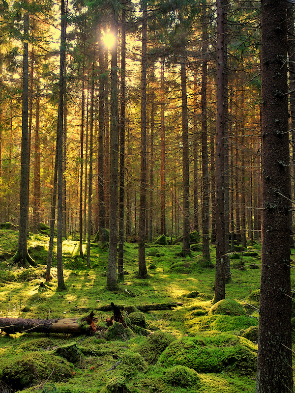 El Planeta ha perdido 175 millones de hectáreas de bosque desde 1990
