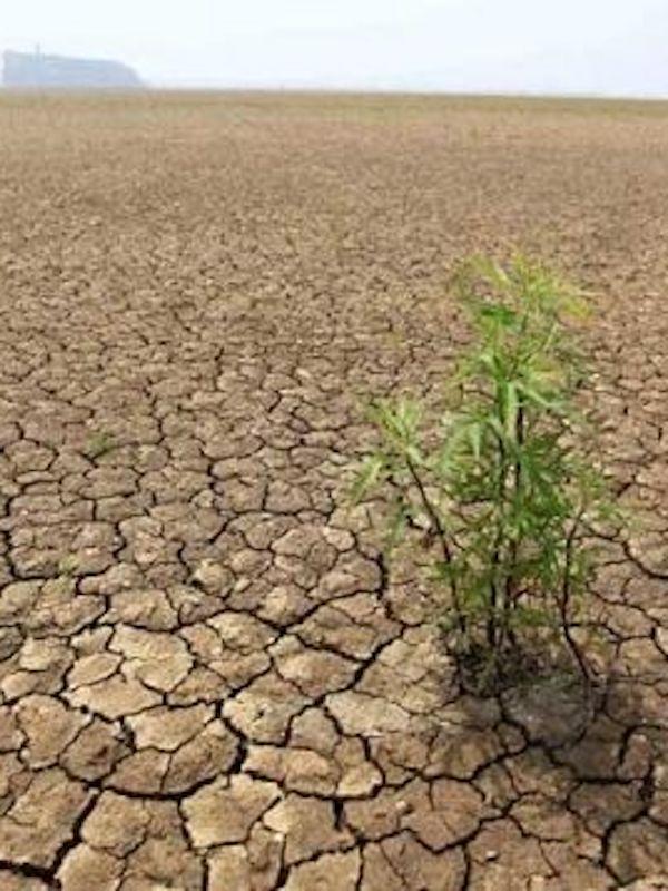 La crisis climática reactivará 'El Niño del Océano Índico'