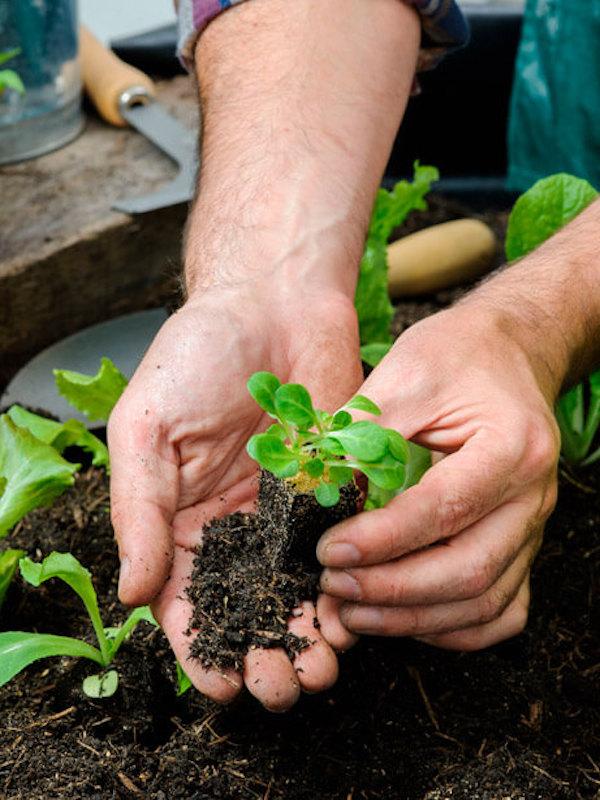 SOHISCERT y LANDALUZ colaboran para impulsar la calidad agroalimentaria