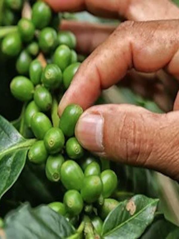 México trabaja para alcanzar la soberanía alimentaria mediante un sistema justo, saludable y sustentable