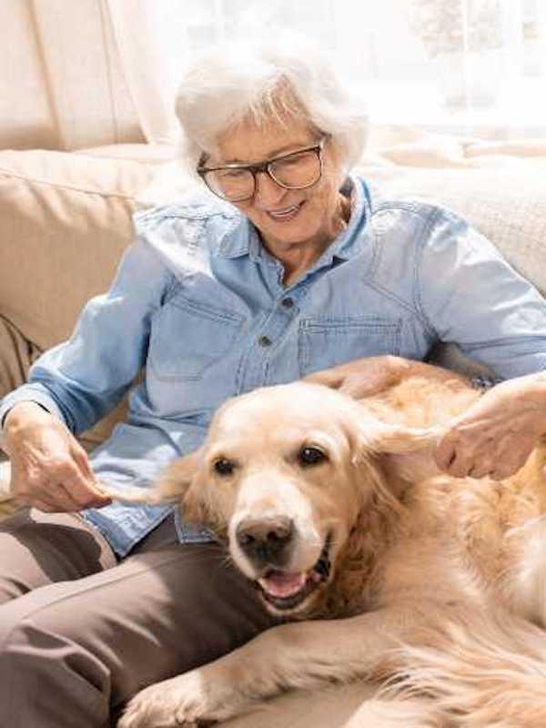 Una 'app' facilita que usuarios paseen perros de personas mayores e impulsa videollamadas con veterinarios