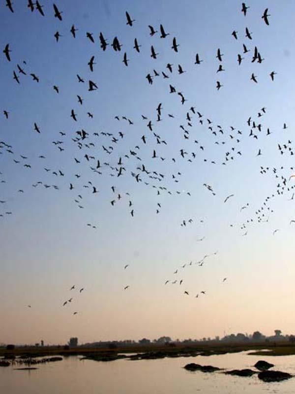 Conectividad ecológica y su importancia para las aves migratorias
