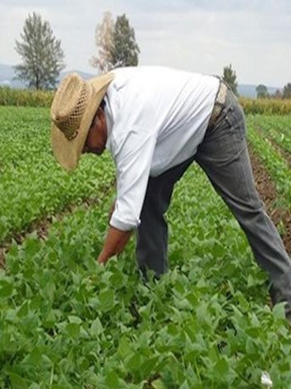 Castilla y León llega hasta las 60.000 hectáreas de producción ecológica