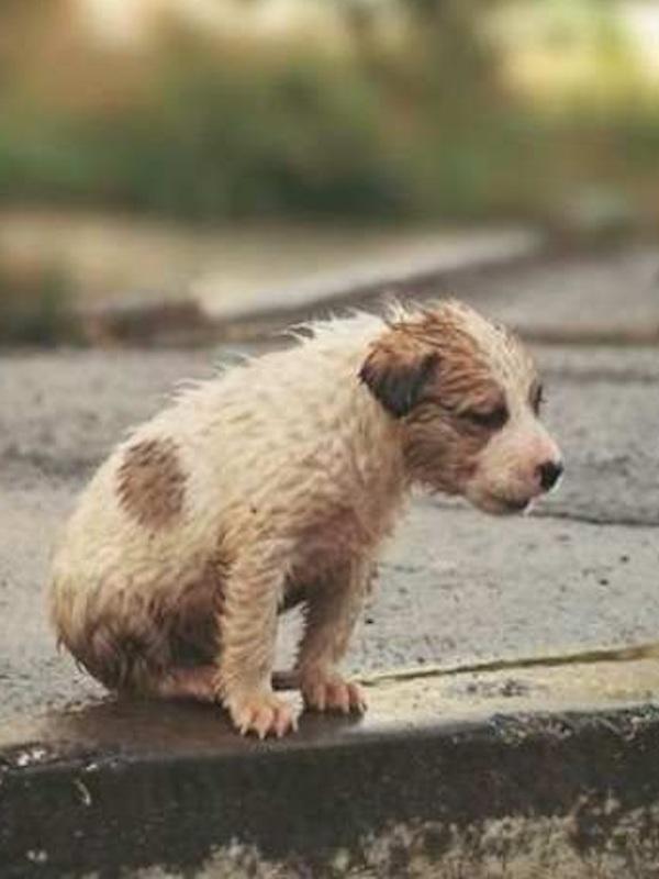 Ley de protección animal frente al abandono y maltrato