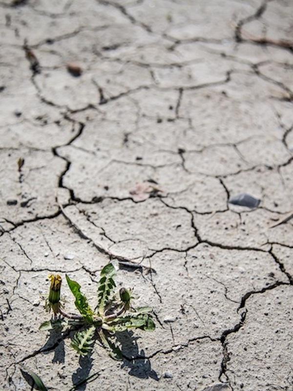 Tecnología y nuevos estilos de vida 'claves' para mitigar los efectos de la 'crisis climática'