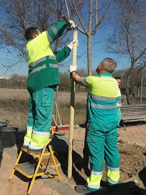 Madrid plantará 2.300 árboles para Ciudad Lineal, Hortaleza, San Blas-Canillejas y Barajas