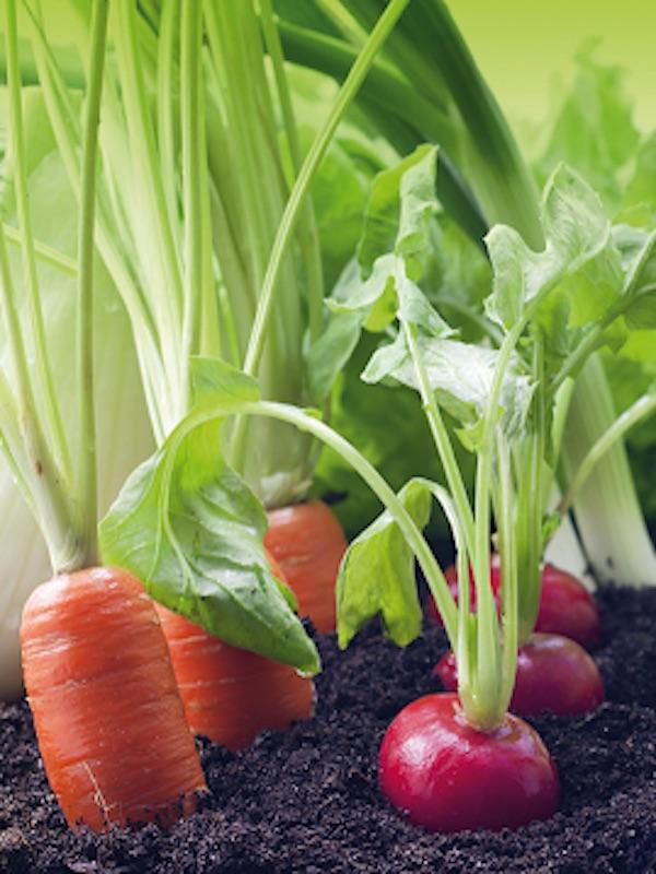 Murcia destina nueve millones de euros en subvenciones para mantener la agricultura ecológica
