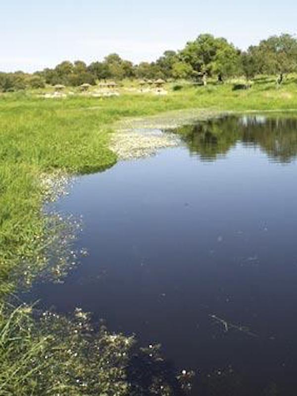 Eliminando barreras artificiales para los peces del río Guadaíra