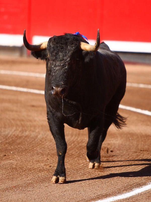 España elimina las ayudas a la tauromaquia