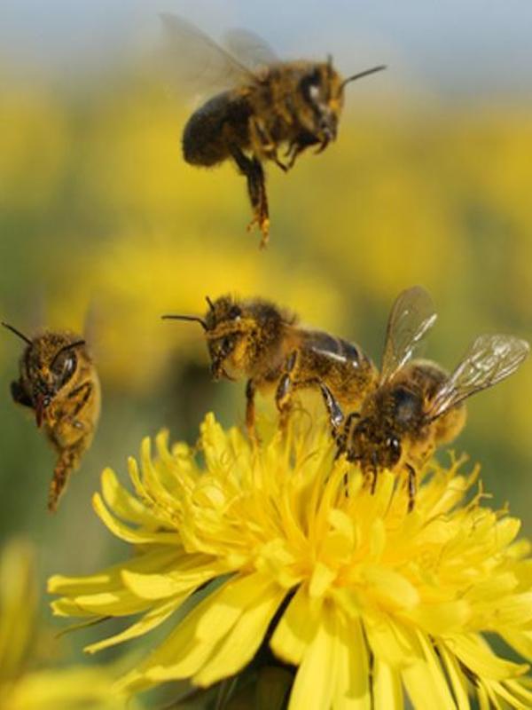 Los insectos han proliferado en las ciudades gracias al COVID-19