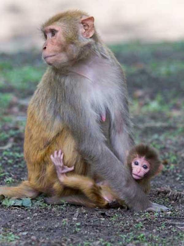 El 'confinamiento' no solo afecta al ser humano, sino a otros mamíferos