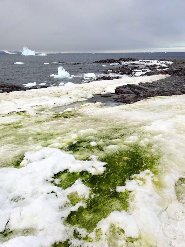 La 'crisis climática' hará verde la Antártida costera