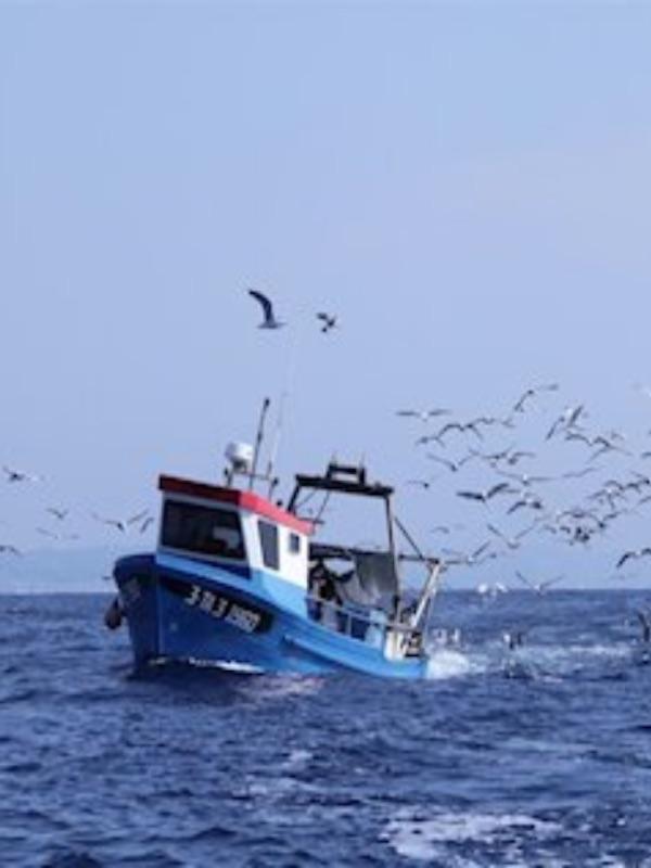 Perplejidad ante el tratamiento de Europa a la pesca en su estrategia de biodiversidad