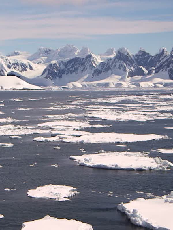 ¿Qué pasa con el impacto de los gases industriales en el ecosistema marino antártico?
