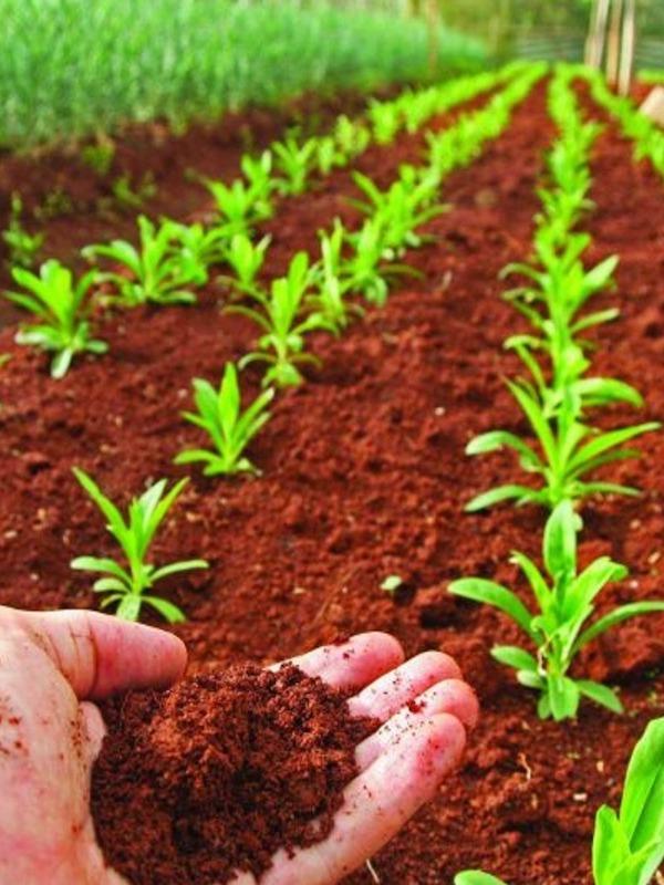 Para recuperar los suelos degradados es preciso impulsar la agricultura ecológica