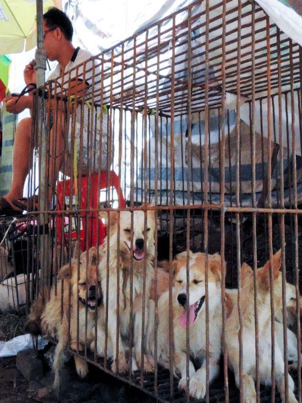 Wuhan prohíbe el consumo de animales salvajes, perros y gatos