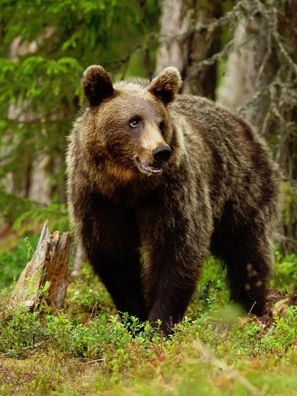 Por un futuro con osos