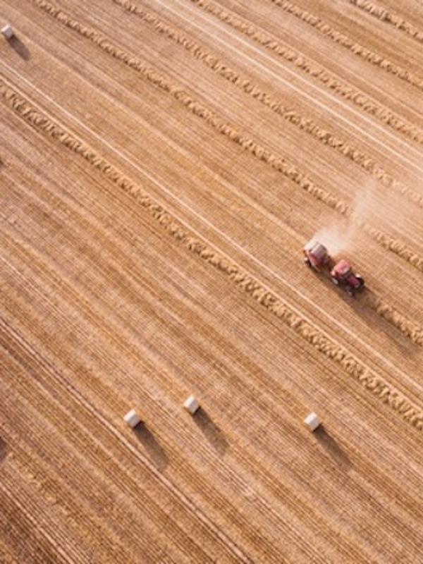La agricultura podría devolver el 50% de las tierras de cultivo a la naturaleza y mantener su producción