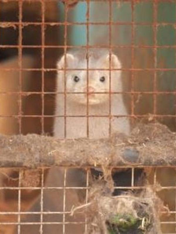 ¿Qué pasa con los animales domésticos y COVID-19?