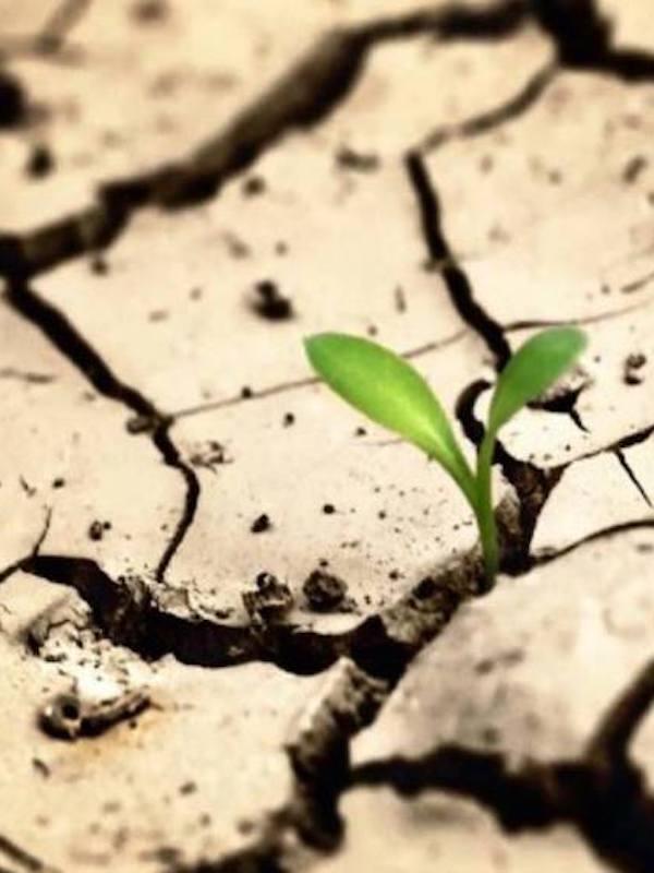 Formulan un innovador plan para hacer frente los efectos de la 'crisis climática' en la salud