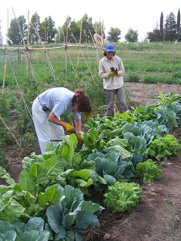 Alienta México transitar hacia una producción agroecológica, forestal y de pesca que respete la vida y la naturaleza