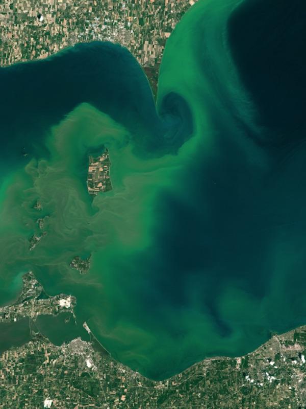 Tecnología verde para detectar y monitorizar las floraciones de algas nocivas