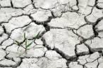 Científicos reivindican una estrategia de adaptación al cambio climático más allá de objetivos de descarbonización