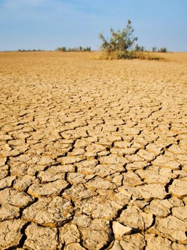 Cambio climático.- La UMA crea una cátedra para estudiar el cambio climático y desarrollar soluciones para combatir sus efectos