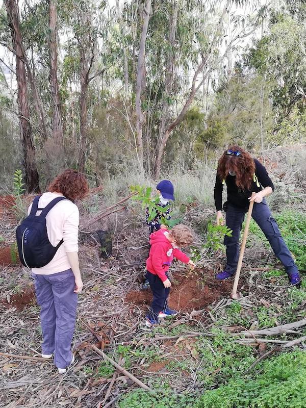 La acción medioambiental de repoblación de árboles en el entorno de Las Huertecillas (Montaña de Firgas)