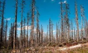 Soluciones para frenar la deforestación corporativa
