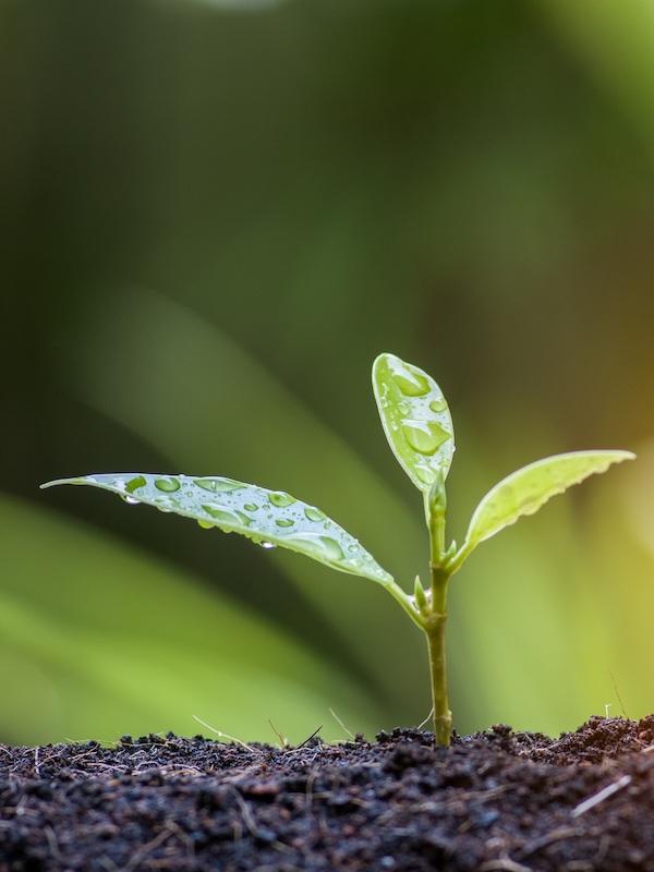 Minsait 'contribuye' a la sostenibilidad medioambiental