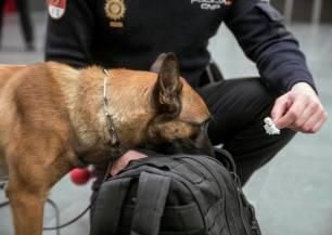 Madrid respalda la campaña que busca hogar a perros policías jubilados