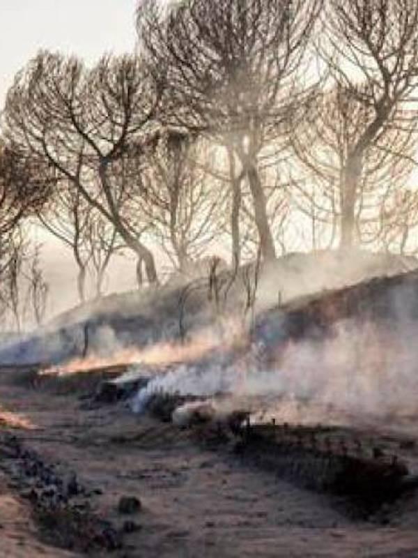 Proyecto para el estudio de aves en el área afectada por el incendio de Doñana en Huelva