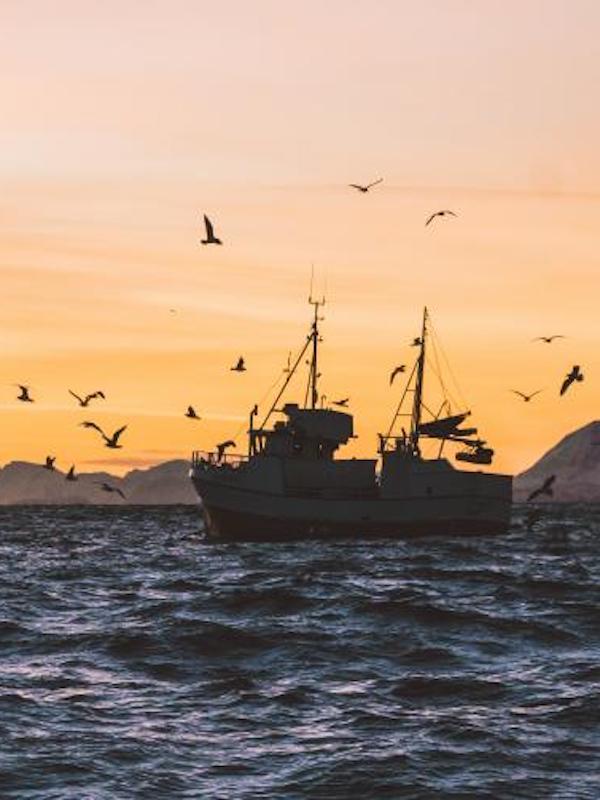 Los Océanos podrían paliar una eventual crisis alimentaria a nivel mundial