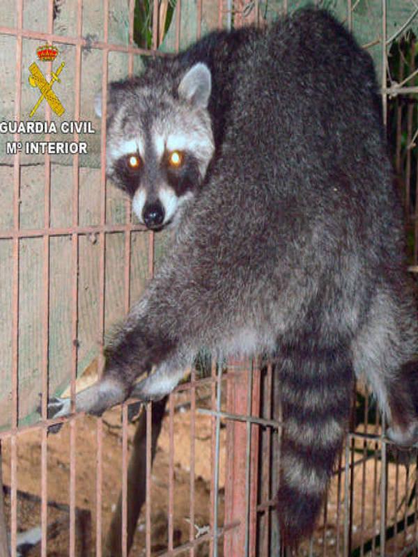 De pura pena, intervienen en Lorca un núcleo zoológico con más de 500 animales en condiciones lamentables