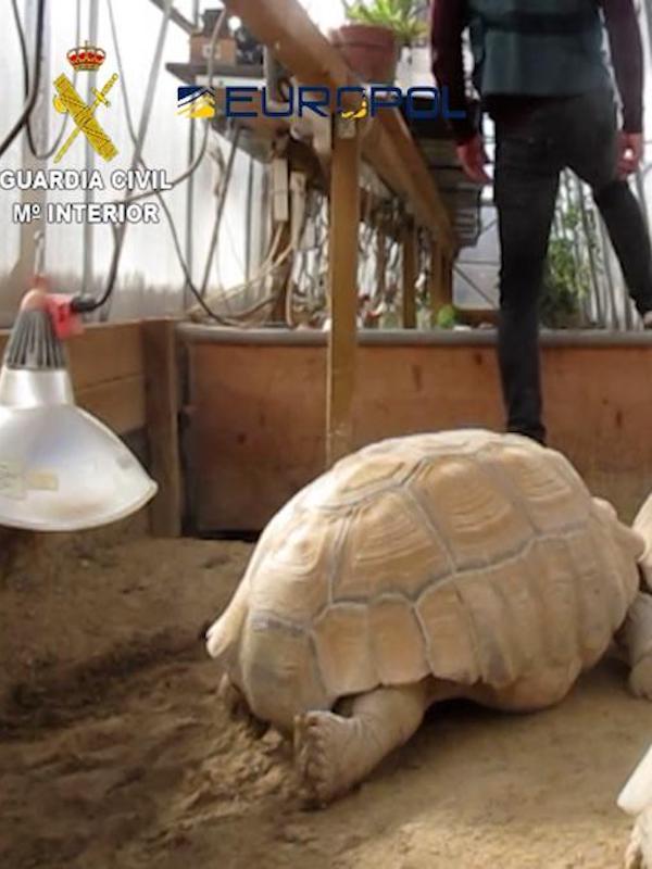 Pillan a traficantes con 300 especies de reptiles de alta protección