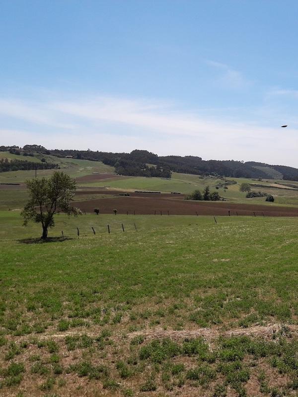 El Principado de Asturias no puede ser cómplice de Red Eléctrica en el anillo central