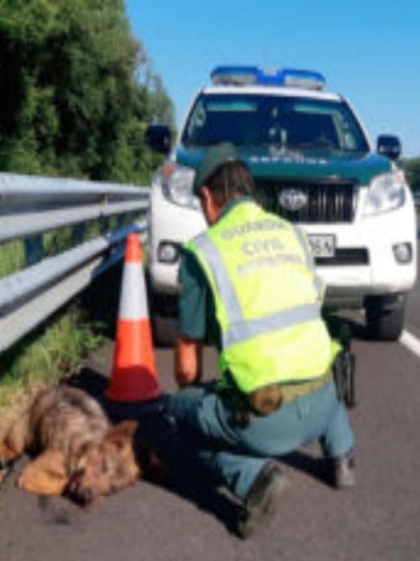 España pone en marcha el Plan SAFE para evaluar la mortalidad de fauna por atropellos