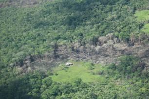 La UICN alerta de que la deforestación de la Amazonía en Colombia es peor que en Brasil