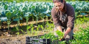 Se dispara notablemente la producción ecológica en España