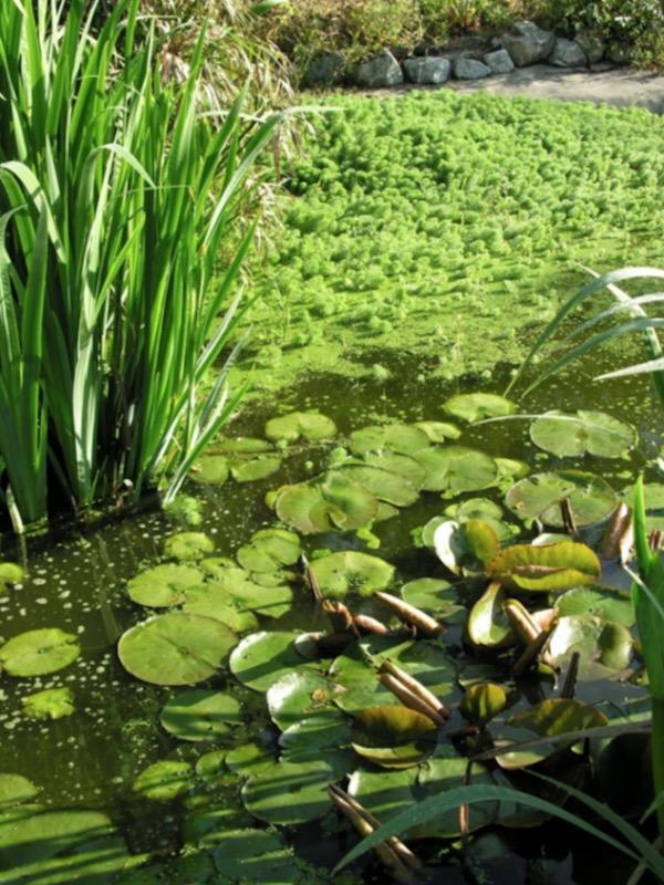 'Tratamiento Natural del Agua' es la compañía que ofrece soluciones integrales, sostenibles, y como no saludables