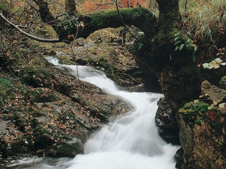 Consorcio de Aguas de Asturias, garante de calidad y profesionalidad para toda la comunidad autónoma