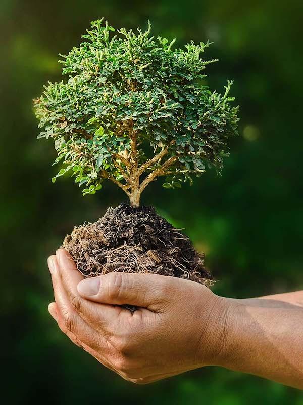 La Región de Murcia sigue evitando los temas medioambientales importantes