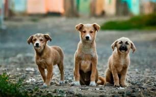 300.000 perros y gatos en 2019 rescatados por las 'protectoras'