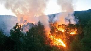 Las interacciones entre el fuego y la acción humana amenazan la biodiversidad en el mundo