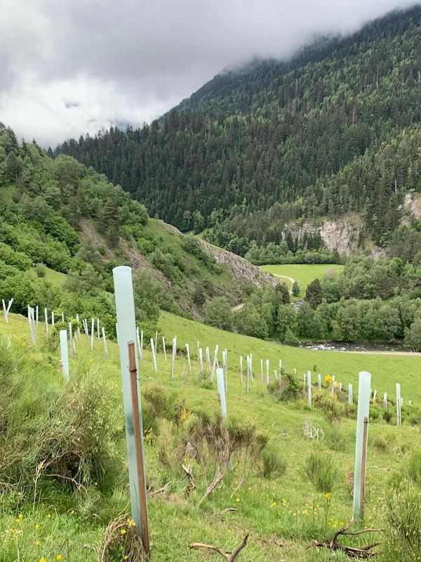 Fundación Oso Pardo creará nuevos bosques de frutales en el Pirineo catalán para preservar la especie
