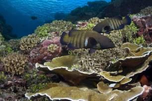 Una nueva metodología simplifica la definición de los biomas marinos