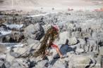 Chile. Alerta por dramática deforestación de bosques de macroalgas en el norte y centro del país